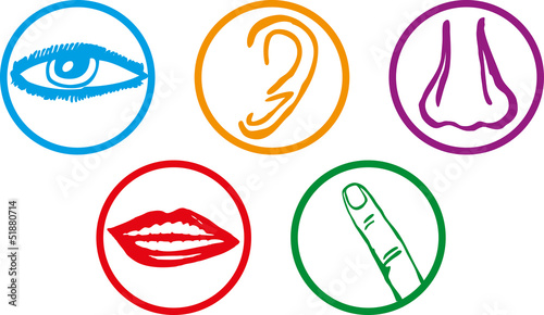 Foto  Five senses icon set - Vector Illustration