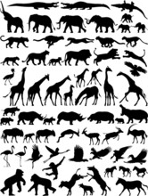 African Wild Animals Vector Si...