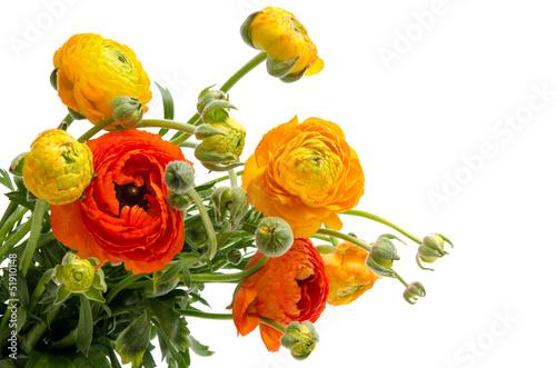 Fotografia Ranunculus asiaticus