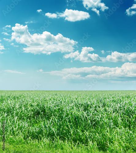 Foto op Plexiglas Groene green grass and blue cloudy sky