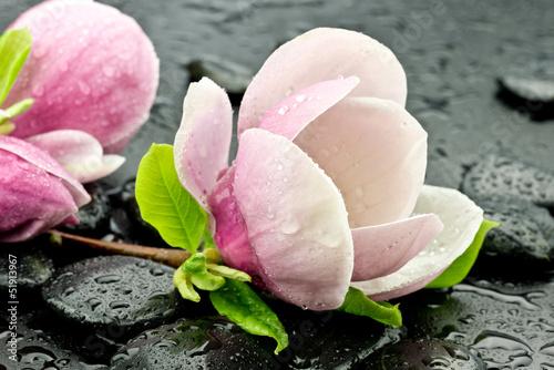 Fototapeta Magnolia z kamieniami do spa obraz