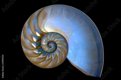 Photo Nautilus