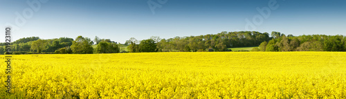 La pose en embrasure Jaune Oilseed Rape, Canola, Biodiesel Crop