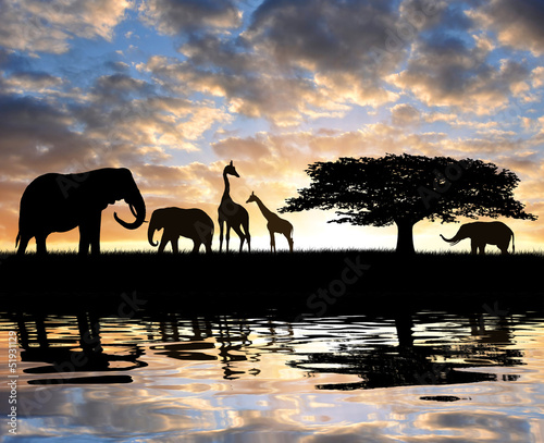 Silhouette elephants with giraffes in the sunset