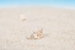 Neat seashell on the sandy beach