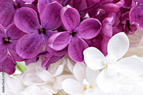 Spoed Foto op Canvas Macro Beautiful Bunch of violet and white Lilac