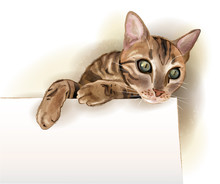Hand Drawn Illustration Of  The Cat With Banner. Watercolor Styl