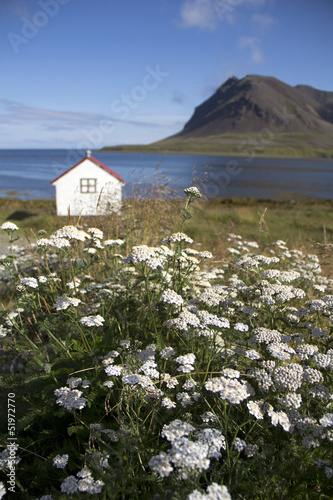 Poster Scandinavie haus mit blumenwiese
