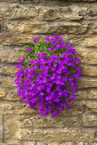 Tuinposter Lavendel Aubretia Plant