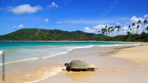 Poster Tortue Sea turtle on beach. El Nido, Philippines