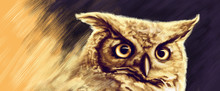 Drawing Of Great Horned Owl St...