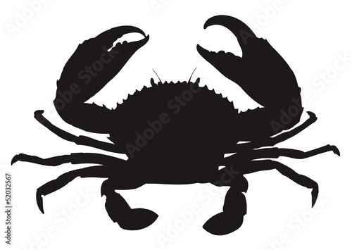 Valokuva  HQ vector silhouette of crab isolated on white background.