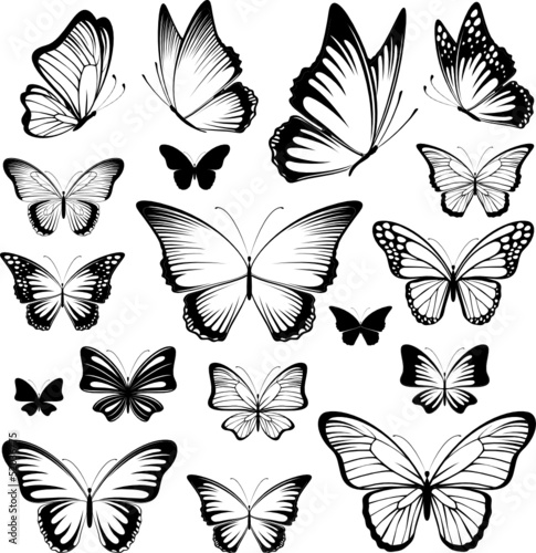 butterfies tattoo silhouettes #52036775
