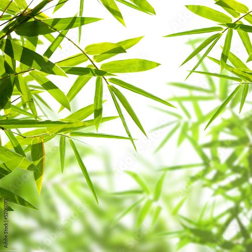 Nowoczesny obraz na płótnie bamboo leaves isolated on a white background