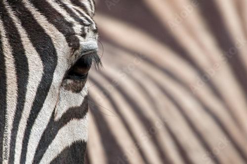 Tuinposter Zebra Zebra 3
