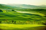 Grüne, toskanische Felder