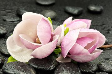 Obraz na SzkleMagnolie z kamieniami do spa