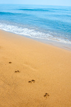 Isolated Dog Footsteps In Sand Along The Shore On Tropical Beach