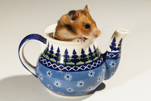Hamster In A Ceramic Pot For T...