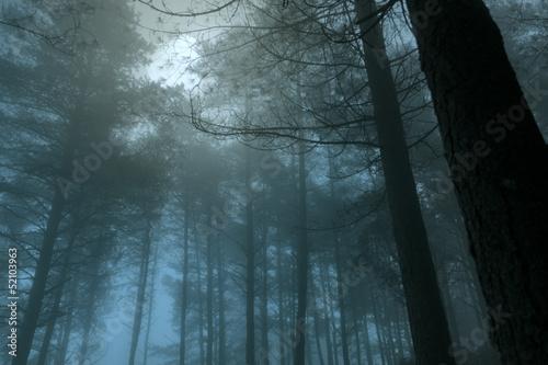 Fotobehang Volle maan Full moon forest
