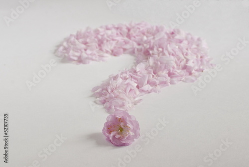 Fotografie, Obraz  Pink petals lined like a question mark, white background.