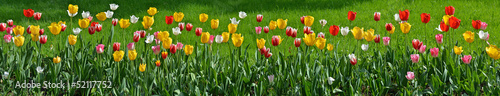Floral panorama #52117752