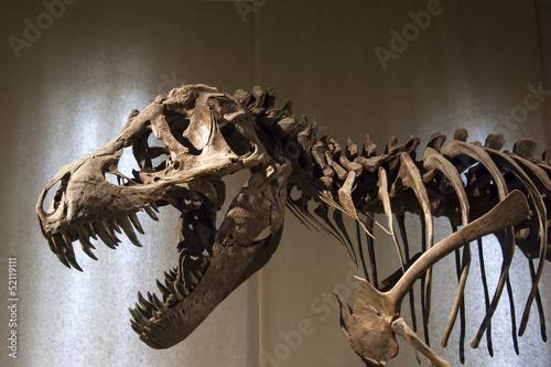 Photo  Tyrannosaurus Rex skeleton