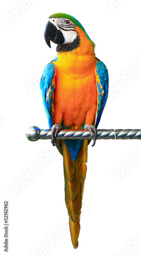 Foto op Canvas Papegaai Colorful red parrot macaw isolated on white background