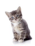 The gray striped kitten sits on a white background.