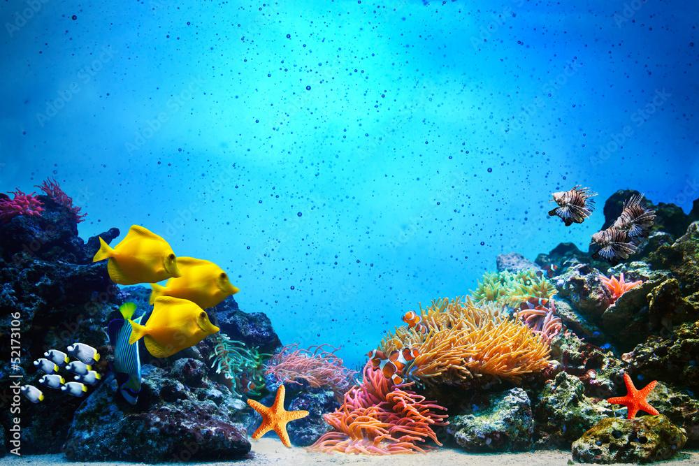 Fototapeta Underwater scene. Coral reef, fish groups in clear ocean water