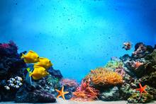 Underwater Scene. Coral Reef, ...