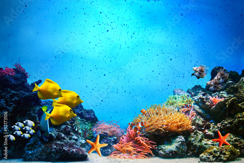 Photo Stands Coral reefs Underwater scene. Coral reef, fish groups in clear ocean water