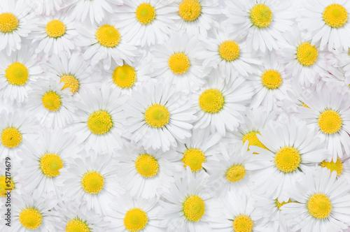 daisy flowers texture - 52174679