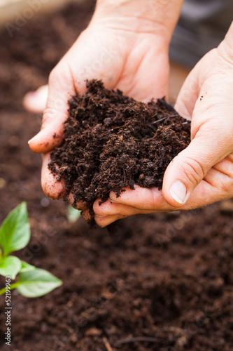 Foto  Hände halten frische Erde