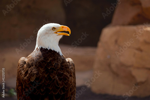 Photo  American Eagle profile view of the background of rocks