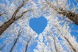 Fototapeta Fototapety na sufit - Winter landscape,branches form a heart-shaped pattern