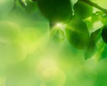 Spring Apple Leaf Background