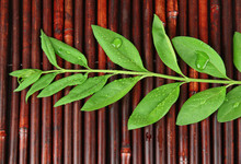 Green Leaves On Bamboo Mat Background