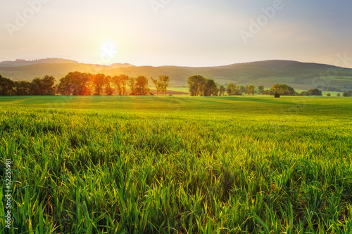 Foto op Aluminium Pistache Green wheat field