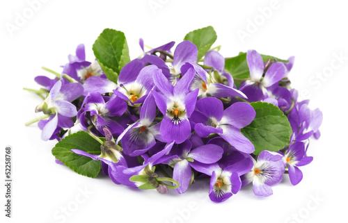 Fotografija  flower violet