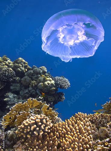 podwodny-morski-krajobraz-rafa-koralowa-w-tle-meduza
