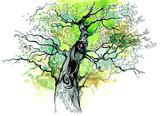 tree trunk - 52270139