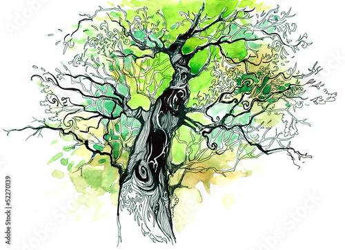 pnia-drzewa