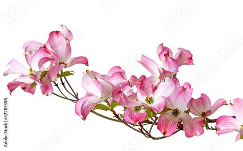 różowy obraz cipki