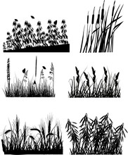 Set Of Six Different Plants Si...