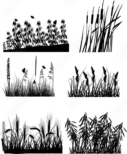set of six different plants silhouettes isolated on white Canvas Print