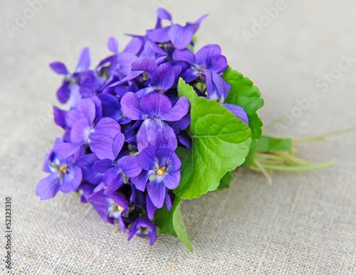 Fotografie, Obraz  Wood violets flowers (Viola odorata) on sackcloth