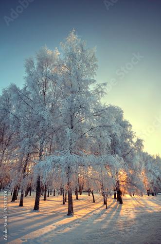Fotografia frosty winter day