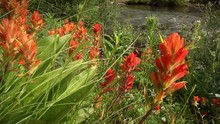 1293 Wildflowers Paintbrush Fi...