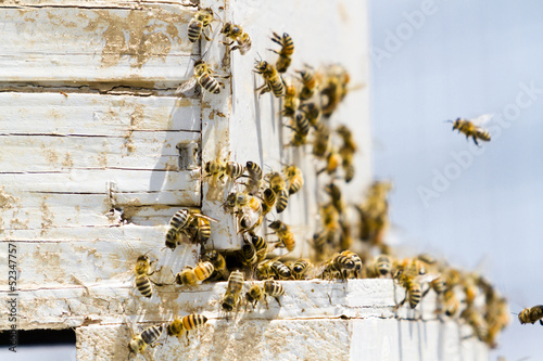 Canvas Prints Bee Beekeeping